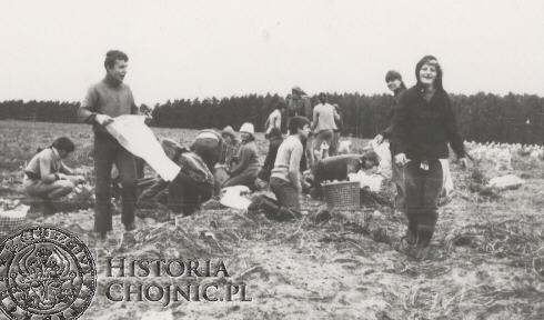 Wykopki - rok 1982.